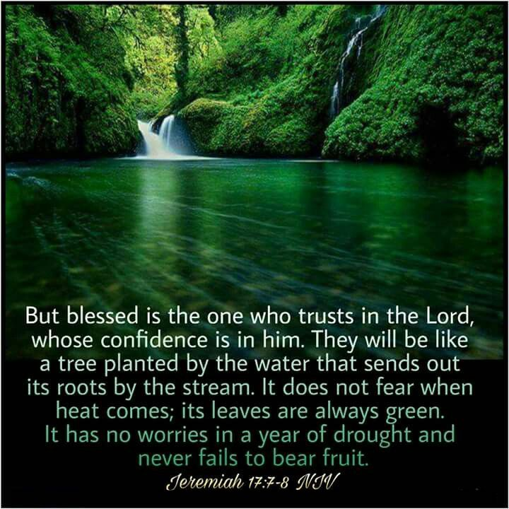 """EBC-Verse Jeremiah 17:7-8 """"But blessed is the one who trusts in the Lord,..."""""""